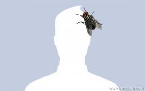 Scarica l'immagine di profilo con una mosca!