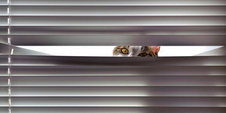 Gatto spione