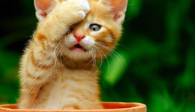 gatto-sorpreso